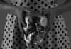 Madchild – Devils & Angels (prod. Evidence)